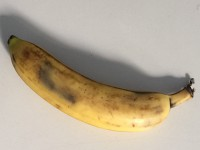 FS-2015-09-26 Banane