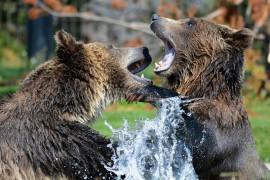 Geländespiel wie Grizzlies